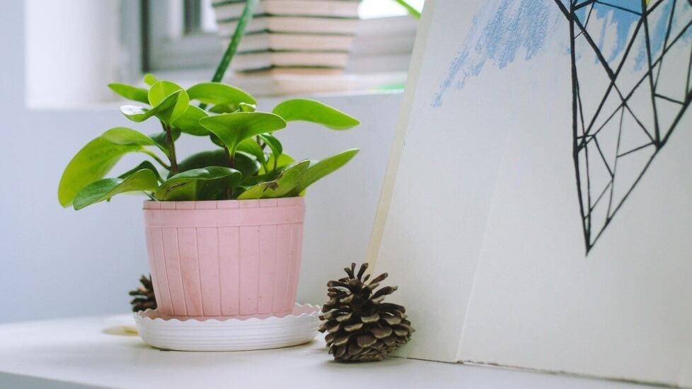 グリーンのある生活で毎日ワクワク。おすすめの植物キット8選